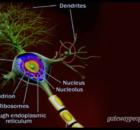 160508 bump lollipop mushroom Dr. Caroline Leaf